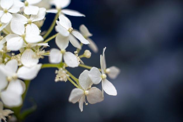 Flores blancas tiernas fondo floral romántico con copyspace Foto Premium