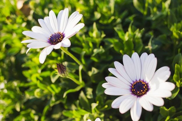 Flores bonitas con pétalos blancos | Descargar Fotos gratis