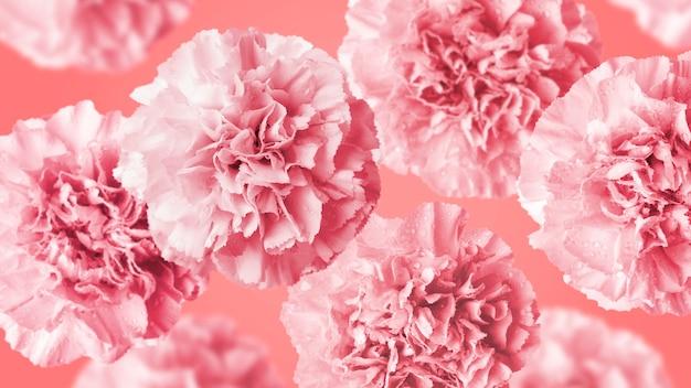 Flores de clavel sobre fondo de color coral Foto Premium