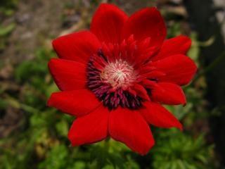Flores De Color Rojo Amarillo Foto Gratis