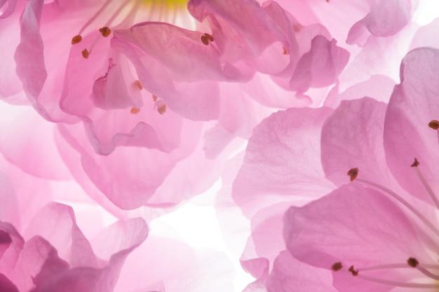 Flores de color rosa de fondo sakura Foto Premium