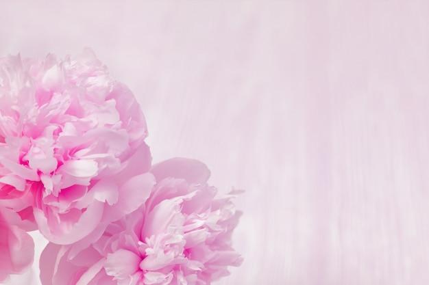 Flores de color rosa peonías fondo floral Foto Premium