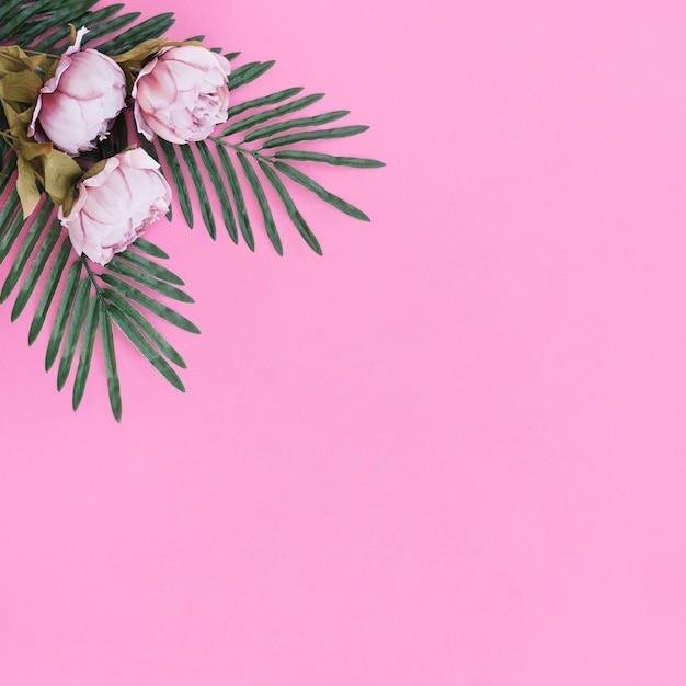 Flores con hojas de palma sobre fondo de marco rosa Foto gratis