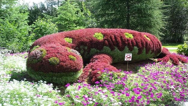 Flores De Jardin De Plantas Salamandra Descargar Fotos Gratis - Plantas-de-jardin-con-flores