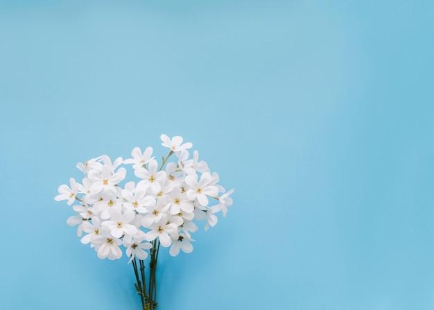 Flores de jazmin con copyspace y fondo azul. Foto gratis
