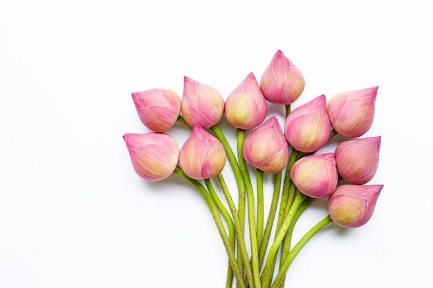 Flores de loto en blanco. Foto Premium