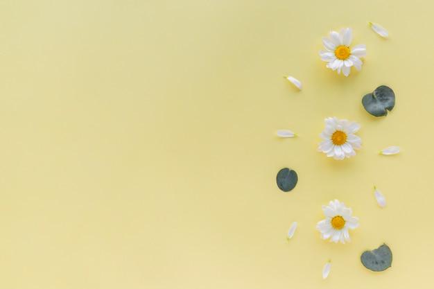 Flores de margarita blanca; pétalo y hoja sobre fondo amarillo con copyspace Foto gratis