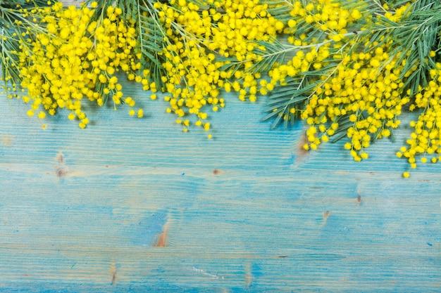 Flores de mimosa sobre fondo de madera azul. 8 de marzo, símbolo del día de la mujer y primavera. Foto Premium