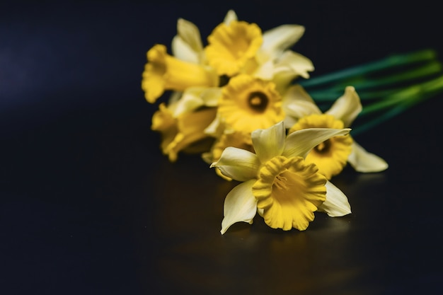 Flores de narcisos amarillos sobre fondo oscuro Foto Premium