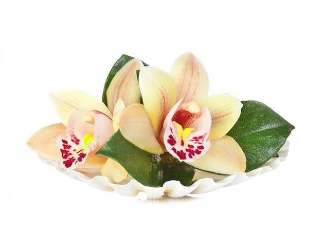 Flores de orquidea en la concha Foto Premium