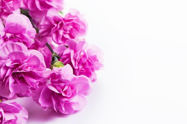 Flores Lilas Con Rosas Sobre Fondo: Flores Rosas Con Fondo Blanco
