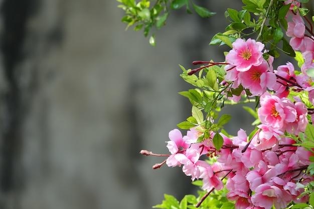 Flores rosas con el fondo desenfocado Foto gratis