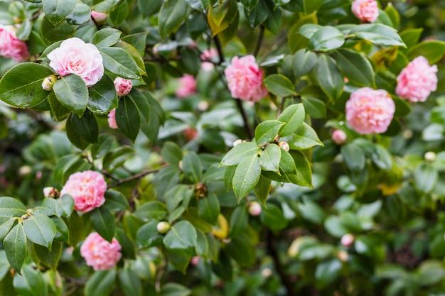 Flores rosas en ramitas verdes con gotas. Foto gratis
