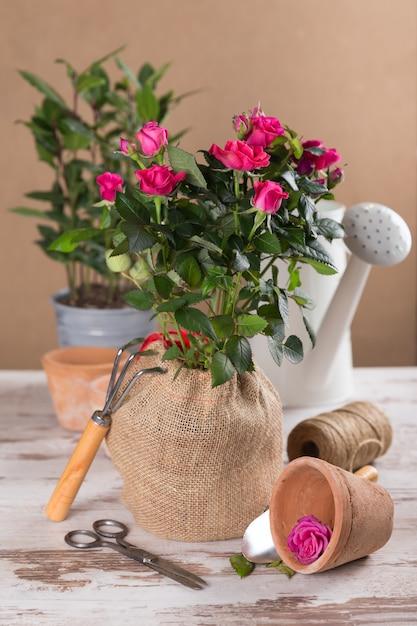 Flores de rosas rojas con herramientas de jardinería. Foto Premium