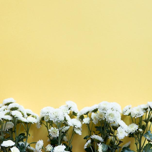 Flores Silvestres Blancas Abajo En Fondo Amarillo Descargar Fotos