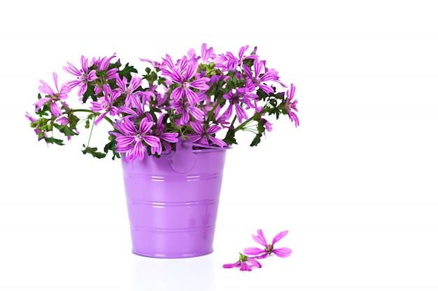 Flores violetas silvestres en balde i Foto Premium