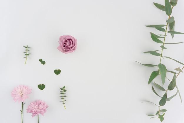 Flores Y Plantas Sobre Fondo Blanco