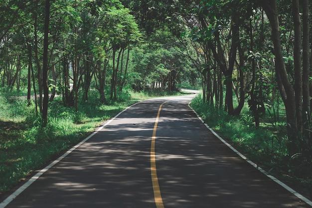 Foggy straight redwood highway en el norte de california, estados unidos Foto Premium