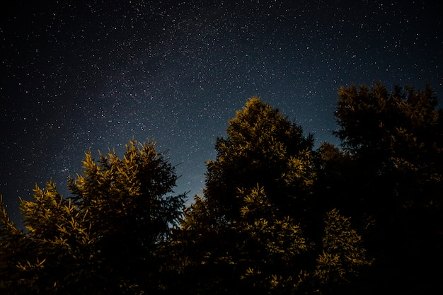 Follaje de bosque verde en una noche estrellada Foto gratis
