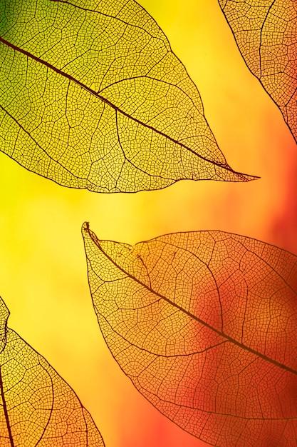 Follaje de otoño transparente de colores vivos Foto gratis
