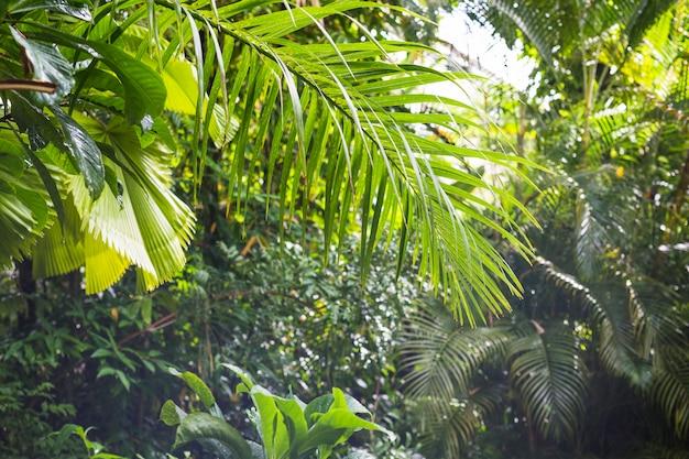 Follaje tropical exótico en bosque lluvioso Foto gratis