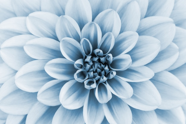 Fondo abstracto floral azul claro Foto Premium
