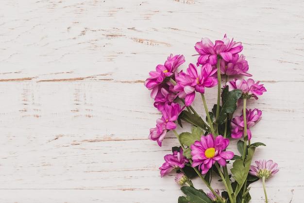 Fondo Blanco Con Flores Moradas