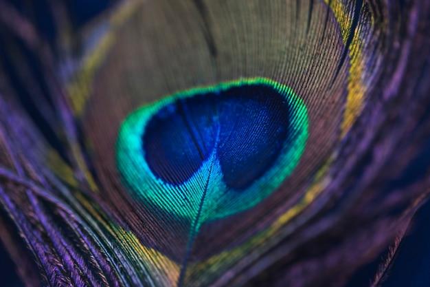 Fondo brillante el patrón de una pluma de pavo real Foto gratis