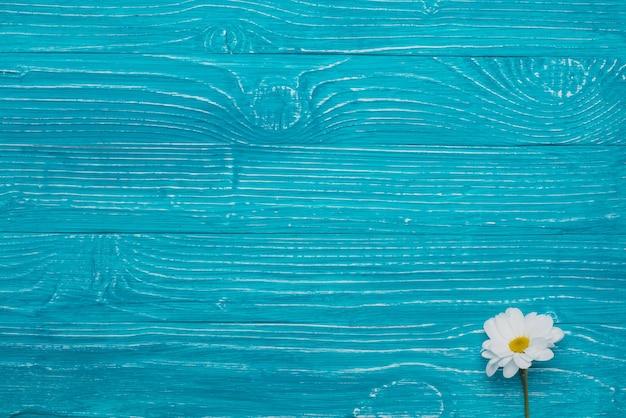 Fondo de madera azul con margarita bonita | Descargar ...