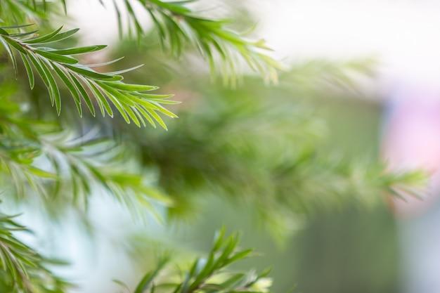 Fondo y diseño verdes del modelo de la hoja. Foto gratis