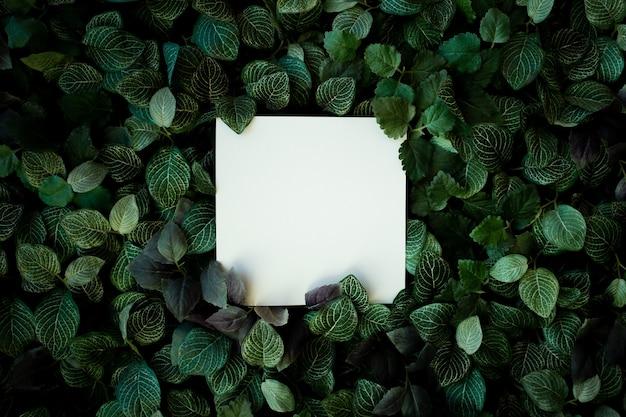 Fondo de follaje tropical con tarjeta en blanco Foto gratis