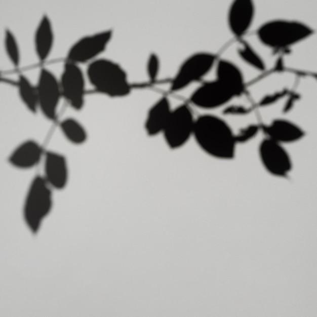 Fondo gris con sombra de hoja Foto gratis