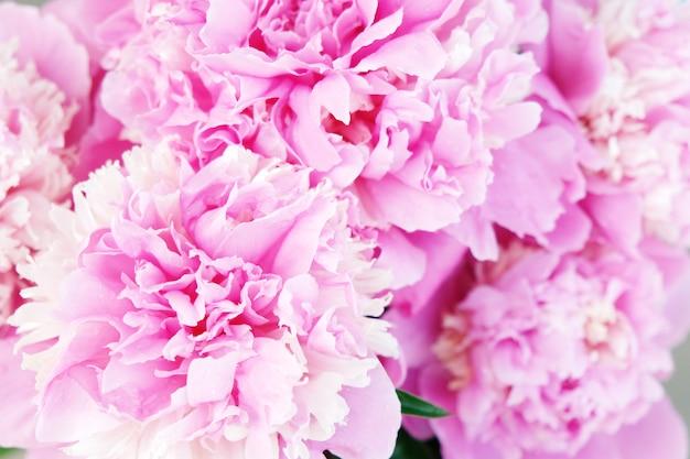 Fondo hermoso de la flor de la peonía rosada. de cerca Foto Premium