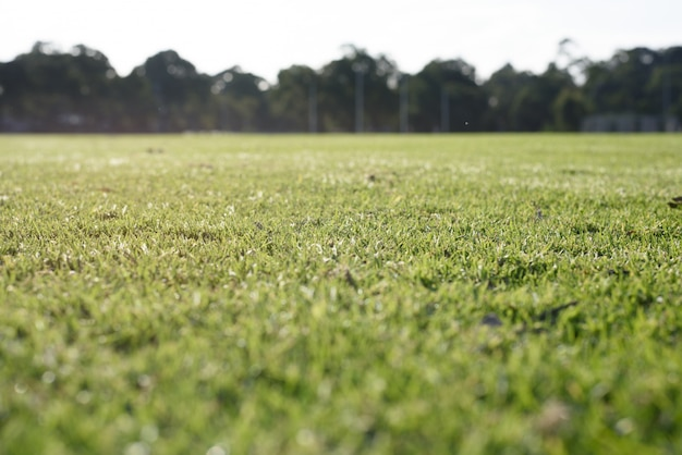Fondo de hierba verde Foto gratis