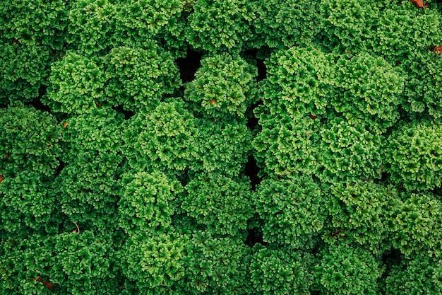 Fondo de hoja verde. Foto gratis