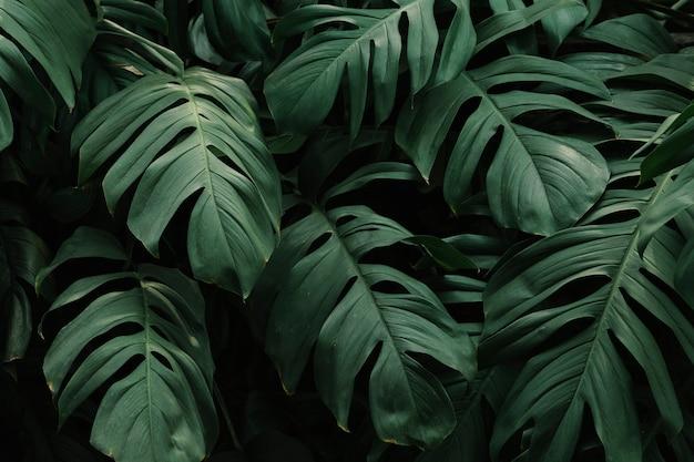 Fondo de hojas verdes tropicales Foto gratis