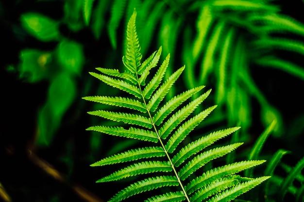 Fondo de idea de concepto de naturaleza de primer plano de hoja de helecho decoración de casa idea de concepto de jardín. Foto Premium