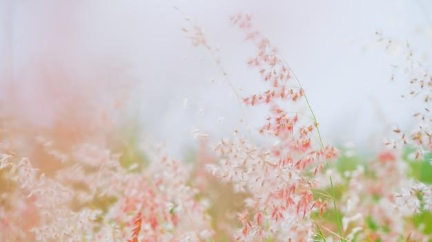 Foto Gratis Flores Fondo Naturaleza: Fondo De Naturaleza Flores De Hierba Rosa Con Vista De