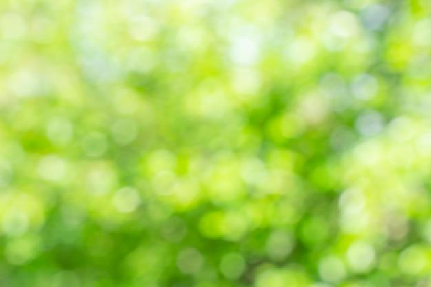 Fondo de naturaleza verde defocused soleado, efecto bokeh abstracto es elemento para su diseño. Foto gratis