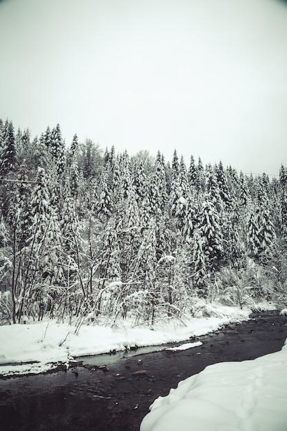 Fondo de navidad con abetos nevados, hermoso paisaje de montaña de invierno Foto Premium