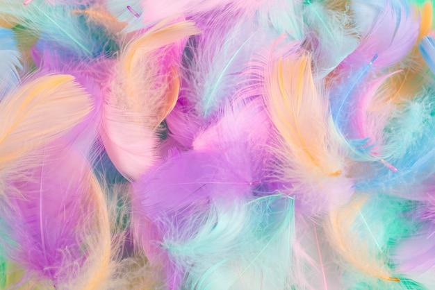 Fondo de plumas de colores, vista superior. Foto Premium