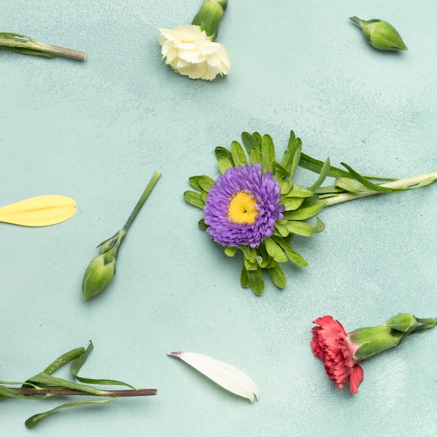 Fondo de primer plano con margaritas y flores de clavel Foto gratis