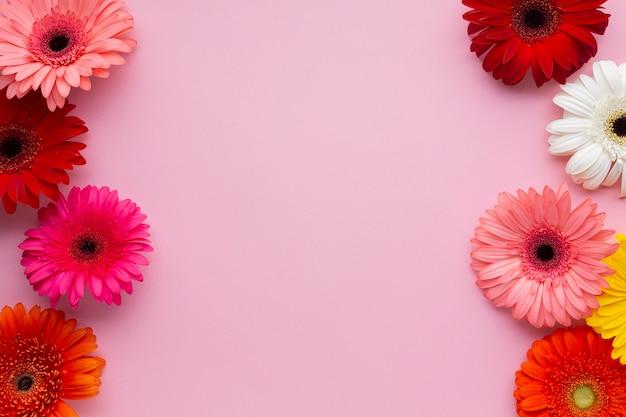 Fondo rosa espacio de copia con margaritas gerberas Foto gratis