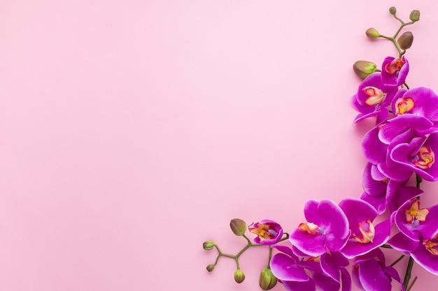 Fondo rosa espacio de copia con orquídeas Foto gratis