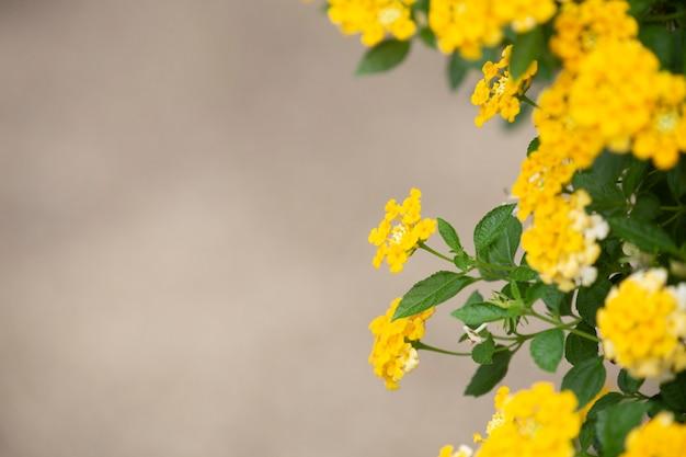 Fondo de tela de flor de oro. Foto Premium