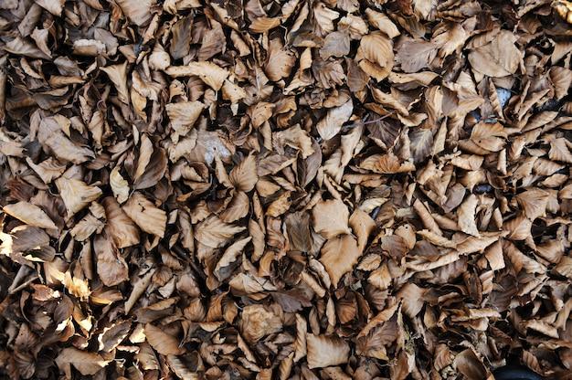 Fondo del tema de otoño - gris y amarillo hoja de arce (con pasto verde) Foto Premium