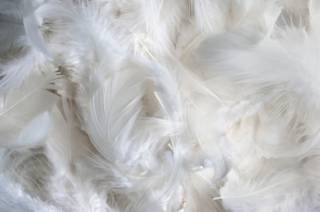 Fondo de textura de pluma blanca. Foto Premium