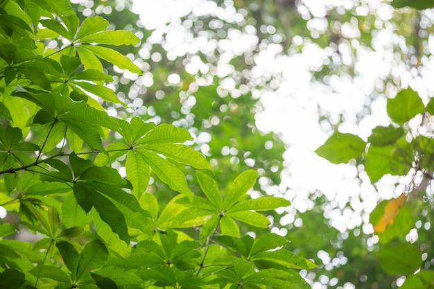 Fondo verde de la hoja en el bosque. Foto gratis