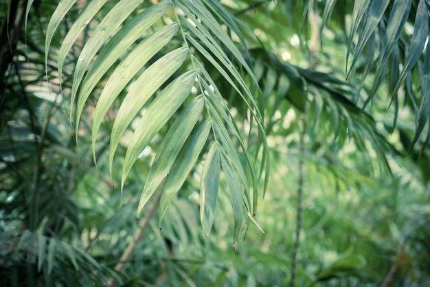 Fondo verde de hojas de palmera tropical Foto Premium
