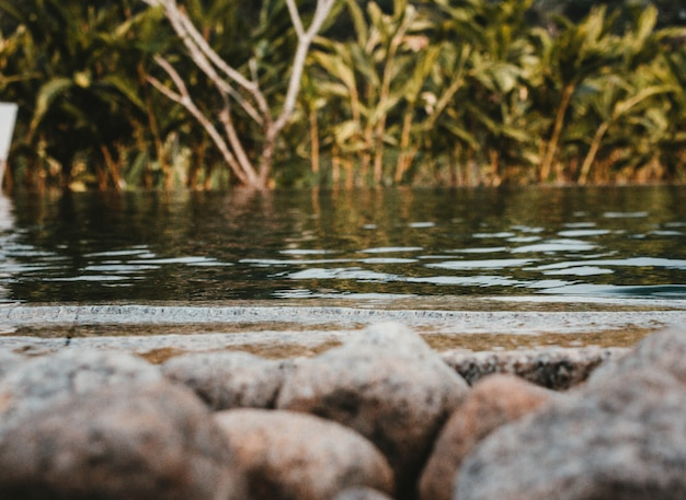 Una foto de un lago con rocas en frente y vegetación Foto gratis
